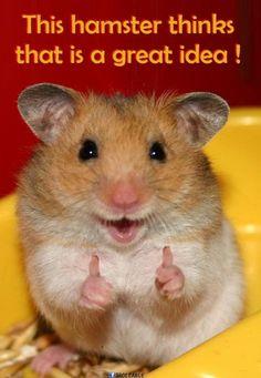 Isn't he an inspiration? Visit Waverider @ http://www.waveridermp3.com #inspiration #humor #brainwaves