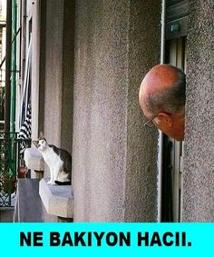 SkunkWire brings you cute and funny animal pictures every day. We got funny cats and cute dogs, plus lots of other funny animal pictures Funny Cats, Funny Animals, Cute Animals, Funniest Animals, Crazy Cat Lady, Crazy Cats, Animal Pictures, Funny Pictures, Hello Pictures
