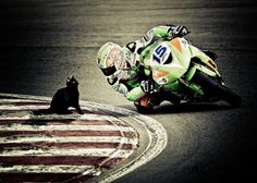 Watch the track, not the cat!