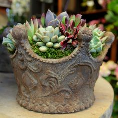 An other perfect example in regards to the importance of the uniqueness of a container...Succulents are beautiful on there own but the container, pot, or vase sets the direction and the mood of your arrangement.Here at Roger's Garden they used an antique style clay pot in the shape of a crown...The perfect gift for the queen of the house!!!