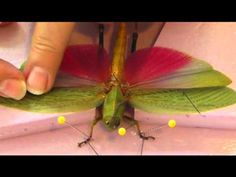 Spread Wings of Grasshoppers - YouTube
