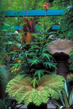 Little and Lewis Sculpture for the garden: concrete cast of dinosaur plant leaf.