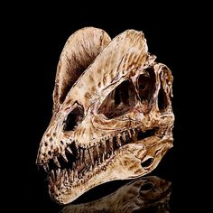 Realistic Dinosaur Skull Dilophosaurus Head Skeleton Aquarium Decor White