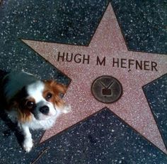 Playboy Charlie sits by dad's star!