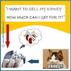 Get Rich Quick, How To Get Rich, Human Kidney, Make Easy Money, Health Care, Law, Medicine, Poses, Image