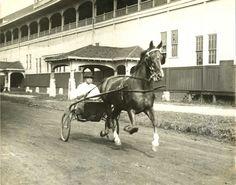 Harness Racing--1927