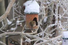 Birds in our garden in the snow
