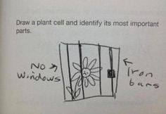 25 Funny Test Answers From Funny Kids - Poor plant. Funniest Kid Test Answers, Kids Test Answers, Funny School Answers, Stupid Test Answers, Funniest Memes, Funny Images, Funny Pictures, Funny Pins, Funny Stuff