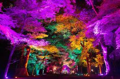 teamlab unveils two immersive art installations at the ancient shimogamo shrine in kyoto, illuminating the sanctuary and its surrounding primeval forest. Forest Light, Electric Forest, Tree Forest, Forest Decor, Landscape Lighting Transformer, Landscape Lighting Design, Tree Lighting, Outdoor Lighting, Lighting Ideas