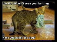 Um, no, I haven't seen your knitting.  Have you asked the dog?
