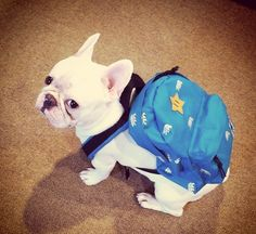 """I've definitely got the coolest backpack of all the kids."" 