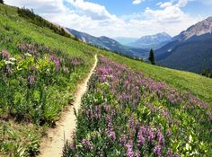 Lupine Trail Crested Butte | The Denver Ear