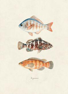 Vintage Fish Les Poissons