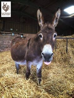 It's been a wet day in the middle. To cheer us up. a little late night Coco from Donkey HQ https://m.facebook.com/TheDonkeySanctuary/photos/pb.152390983200.-2207520000.1431982092./10152871654778201/?type=1&source=54&refid=17 …
