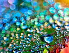 colourful dew