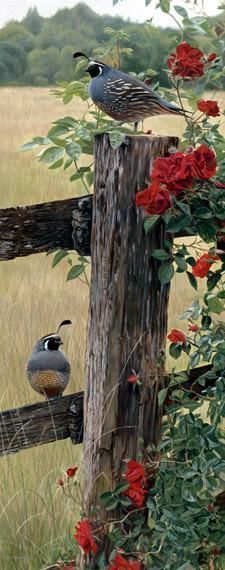 """Bobwhite's"" as they were called when I was a child.  Beautiful quail...remember hearing them from the back porch of Granny's house. (scheduled via http://www.tailwindapp.com?utm_source=pinterest&utm_medium=twpin&utm_content=post17993884&utm_campaign=scheduler_attribution)"