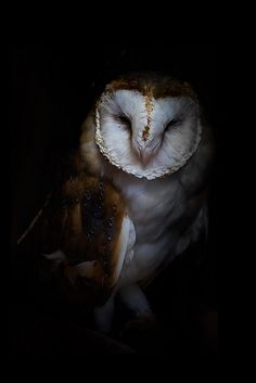 0rient-express.tumblr.com :: Mysterowl :: Mister Owl