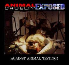 Animal testing - cruel.