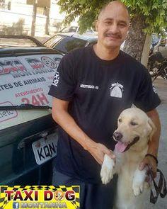 TAXI DOG MONTANHA TRANSPORTE DE ANIMAIS NO RIO DE JANEIRO: SANDRO e Thor(labrador)04/01/2016 -- Nosso Amigo, ...