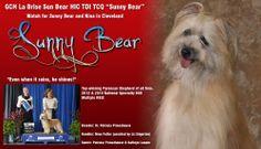 http://www.bestinshowdaily.com/gch-labrise-sun-bear/