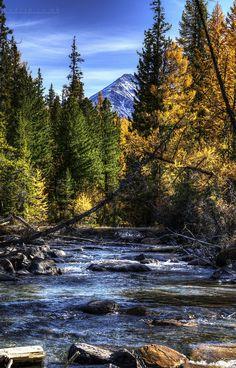 Yellow Autumn Flow in Altai Mountains