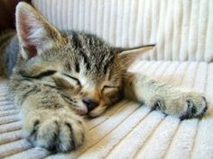 Happiness is being able to take a nap...