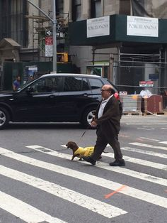 Not Something You See Walking To Work Everyday!!! - Imgur Daschund, Dachshund Love, Dachshunds, Funny Pics, Funny Pictures, Random Pictures, Long Haired Miniature Dachshund, Danny Devito, Wiener Dogs