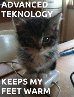 #kitten -  #feet