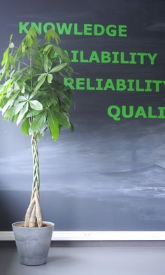 http://officeplant.pl/ rośliny do biura - pachira