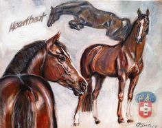Would you like to present your stallion, your stable or just make a portrait of your favorite horse? Contact me and get some offers