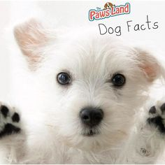 #dogfacts Google prefers dogs to cats. Their official code of conduct specifically states they are a dog company. #dogs