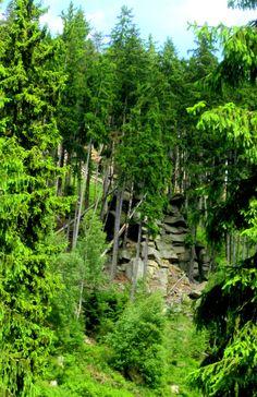 Trail Running in Slavkovský les #Czech Republic. More: http://trampelpfad.net