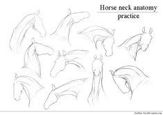 Horse Neck |anatomy practice| by HorRaw-X.deviantart.com on @DeviantArt