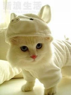 awww - Cats, kitties, and kittens Baby Animals, Funny Animals, Cute Animals, Funny Cats, Funniest Animals, Animals Images, Cute Kittens, Cats And Kittens, Fluffy Kittens