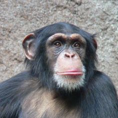 Ponso the chimpanzee has been left to die alone on an island by a company that performed medical testing on him for years. Demand the company pay to move him to a proper sanctuary.