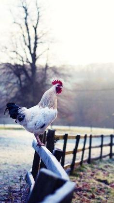 9 Idyllic Images of Americana: Life on the Farm