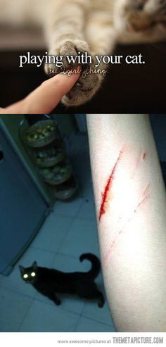 Play with cats they said, it'll be fun they said… #humor #funny #lol #captions