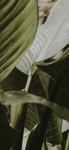 Leaves Wallpaper Iphone, Plant Wallpaper, Green Wallpaper, Nature Wallpaper, Aesthetic Backgrounds, Aesthetic Iphone Wallpaper, Aesthetic Wallpapers, Plant Aesthetic, Beige Aesthetic