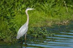 Birding by Canoe: A quiet stream is like an aviary for wild birds. | Missouri Conservationist