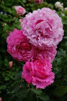 コピスガーデン(6月12日) Nora レポート ~ワンランク上の庭をめざして~