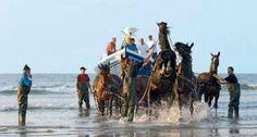 Ameland, vroeger trokken 10 stoere paarden de reddingsboot naar zee, als er nu een schip in nood is vaart de moderne Anna Margaretha met hoge snelheid de haven van Ameland uit.