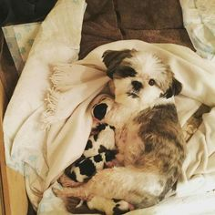 Lottie an her 3 day old pups