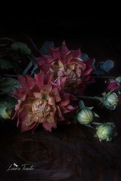 dahlias flowers and buds