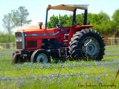 Massey Ferguson Tractor Texas Bluebonnets