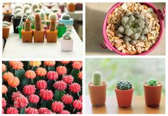 Where to Buy Succulents and Cacti in the Philippines - Love is a Mutt Where To Buy Succulents, Philippines, Cactus, Planter Pots, Make It Yourself, My Favorite Things, Garden, Plants, How To Make