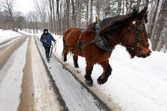 Mary Ann Haxton takes her draft horse Bubba for a walk down the road near A Wrinkle in Thyme Farm in Sumner. Haxton is trying to get the horse in condition for hauling a sled during maple syrup season. — Joel Page/Staff Photographer 2/18/15