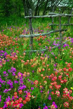 A rustic old fence with multicolored spring wildlfowers in rural Texas, USA.