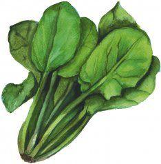 7 Best Logo Ideas Images Logo Ideas Vegetable Stock Forks