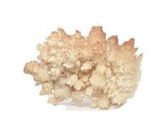 Aragonite BIG Hematite included Orange Cave Formation Spiky
