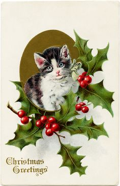 Christmas Kitten Framed by Holly and Berries ~ Free Vintage Postcard Graphic